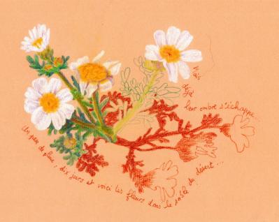 Fleursdudesert