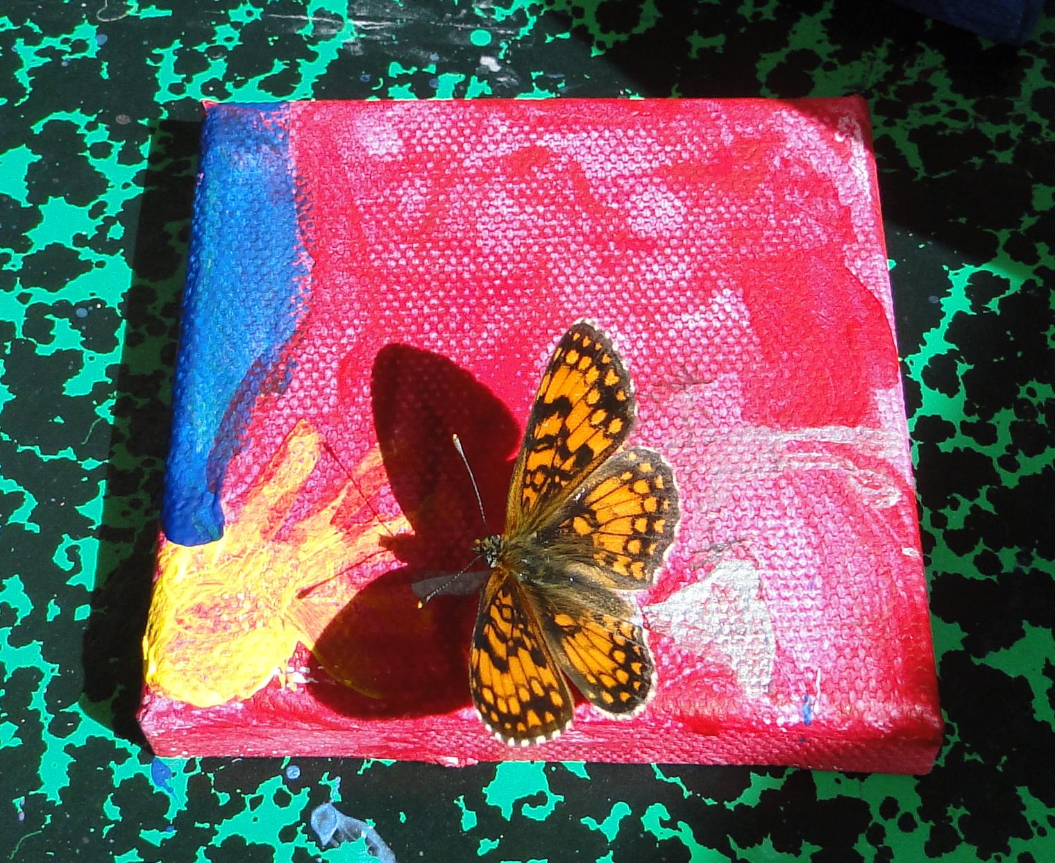 Papillon sur peinture2